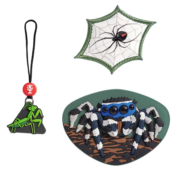 MAGIC MAGS, Jumping Spider